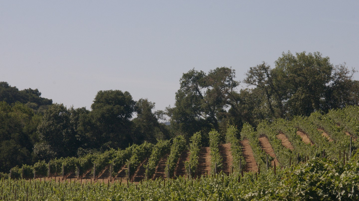 Vineyards in Sonoma | ©Sarah/Flickr