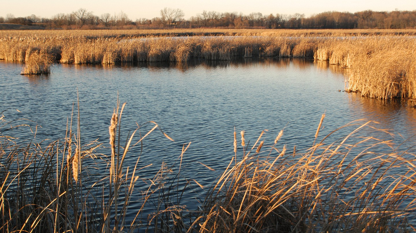 Horicon Marshes | ©Wisconsin Department of Natural Resources/Flickr