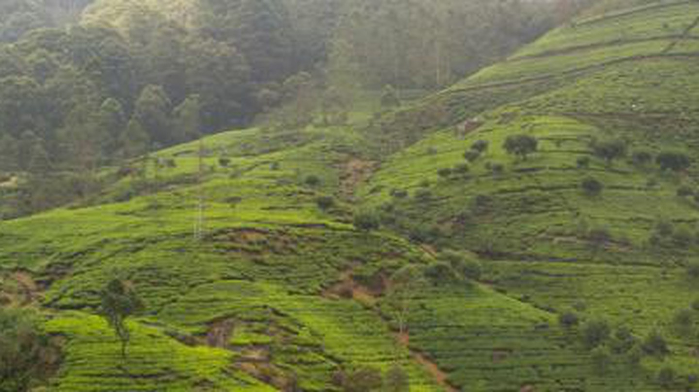 A Blend Of Tea And Culture: Tours And Guides In Sri Lanka