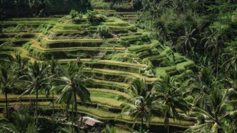 The 10 Best Restaurants In Bali, Indonesia