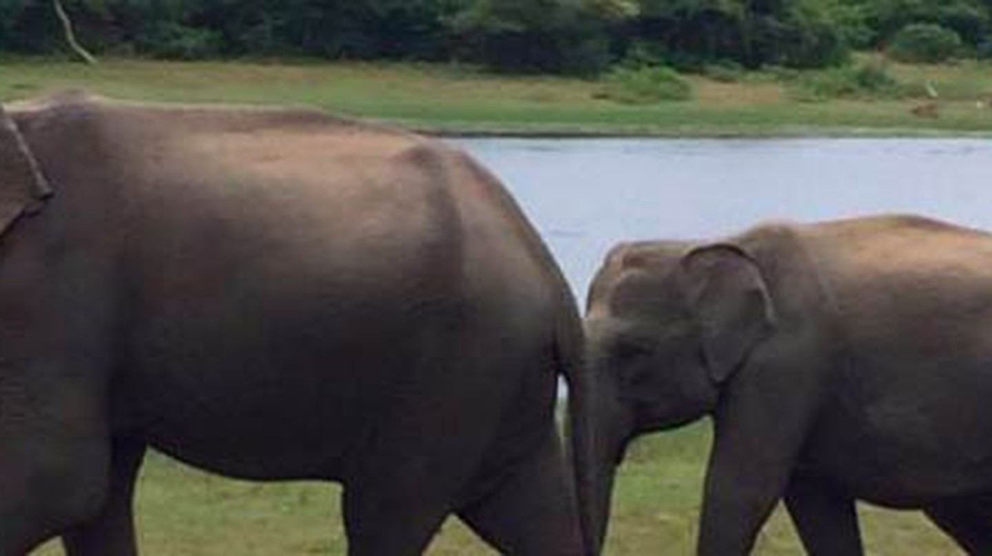 Top 5 Reasons to Travel to Sri Lanka: An Unexpected Gem