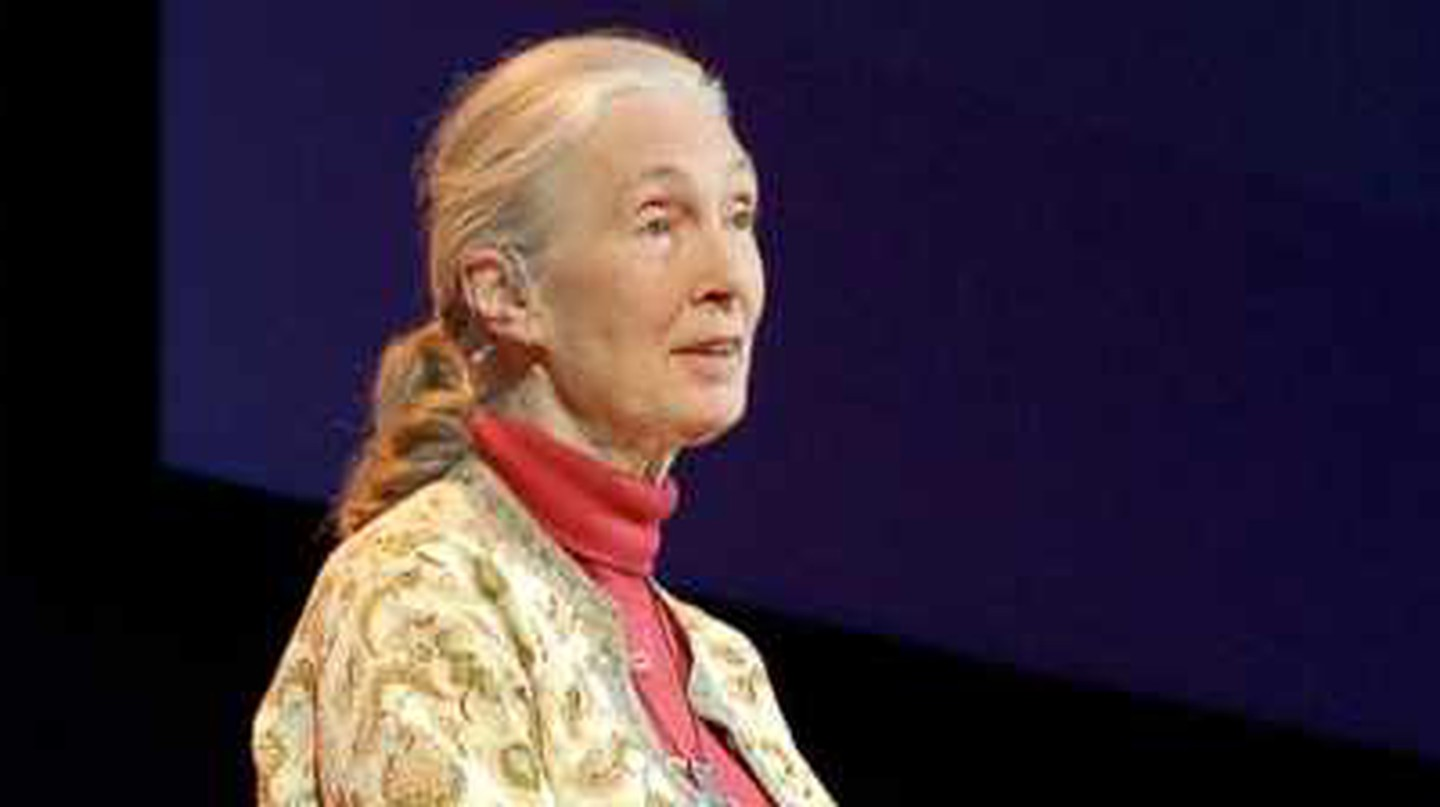 The 4 Books By Jane Goodall You Should Read