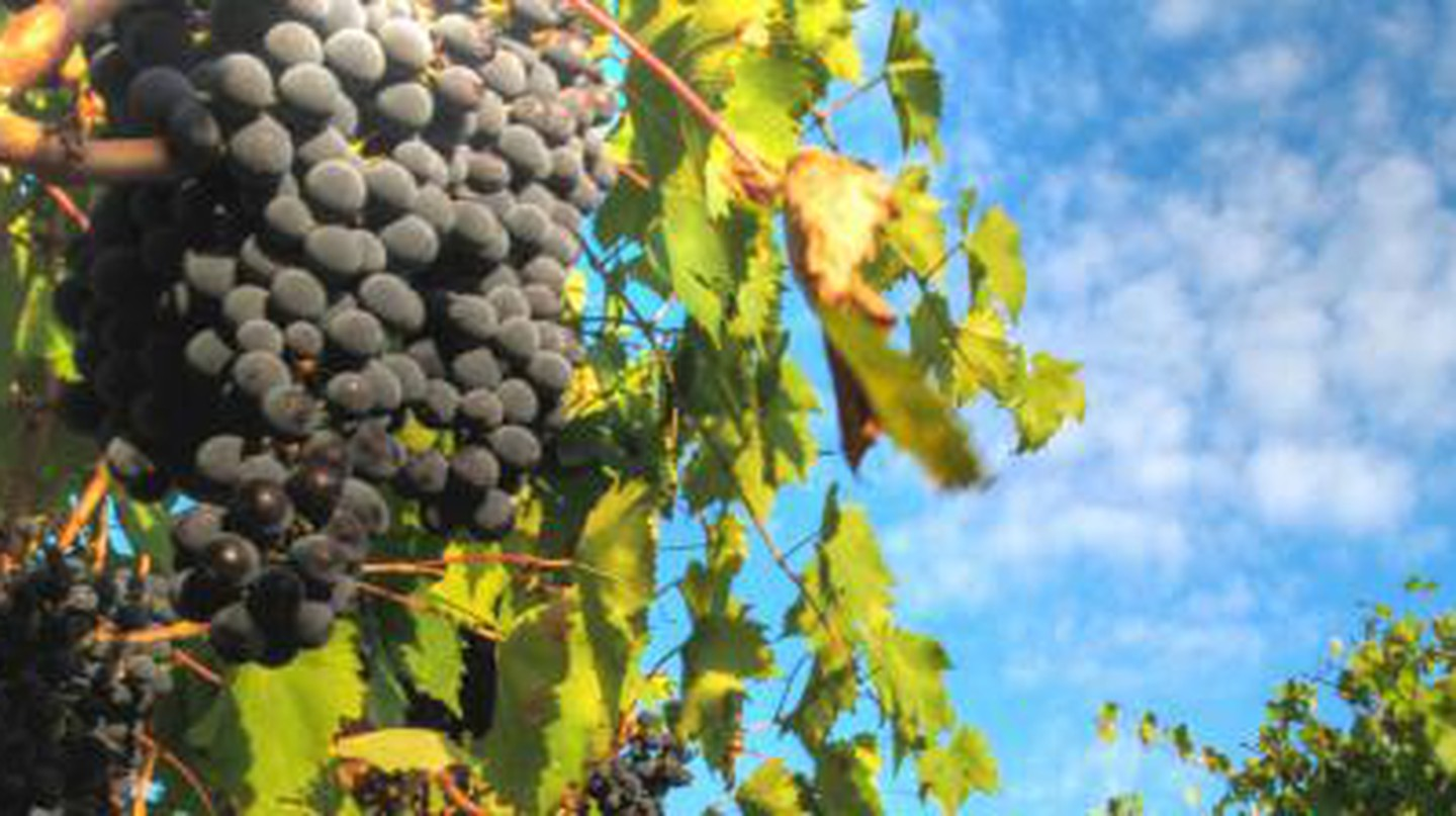 The 10 Best Wineries To Visit In Italy