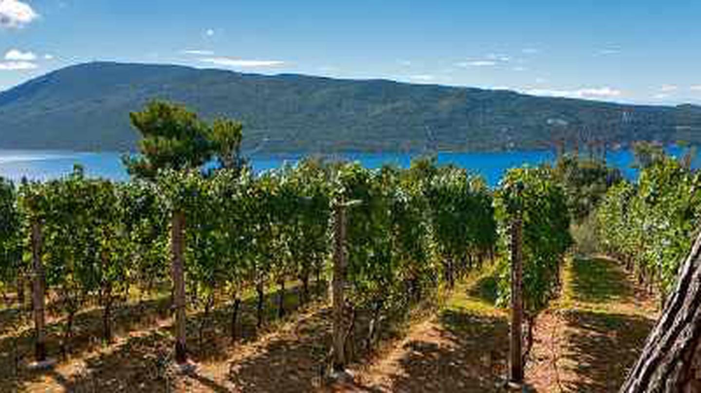 The Top 10 Vineyards In Montenegro