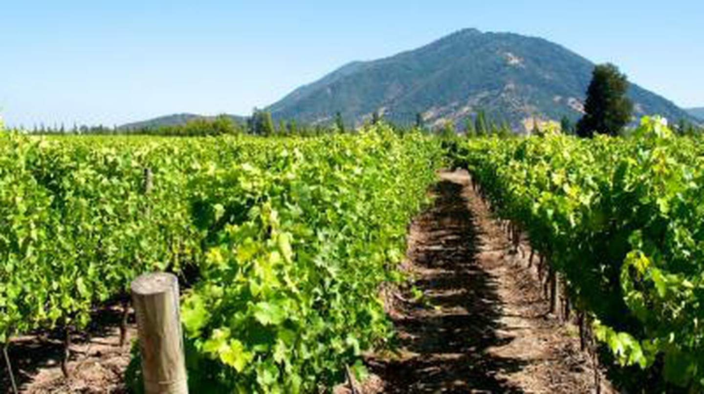 10 Best Wineries In Chile, South America