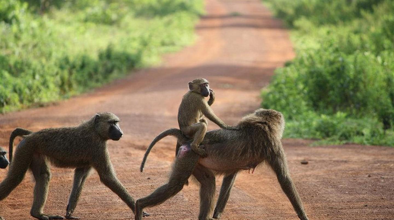 Monkeys in Ghana I © Frontierofficial/Flickr