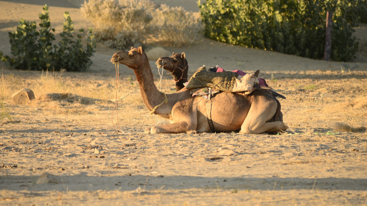 Camel rides in the desert| © Ana Raquel S. Hernandes/Flickr