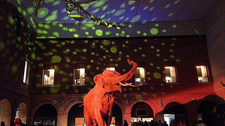 Central Exhibit at Muséum d'Histoire Naturelle | ©Muséum de Toulouse/Flickr