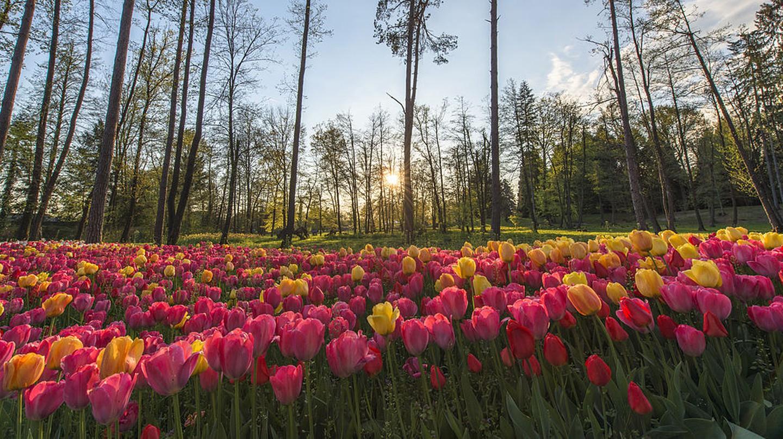 Volčji Potok Arboretum|© Aleš Krivec/WikiCommons