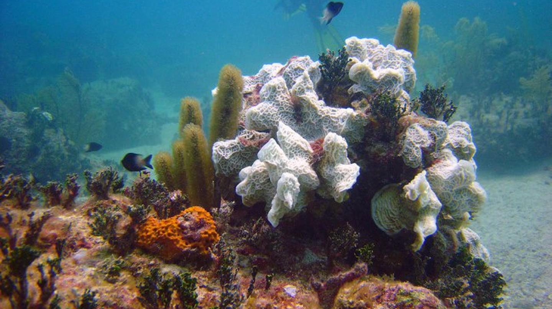 Bimini, coral reef | © Matt Kieffer/Flickr