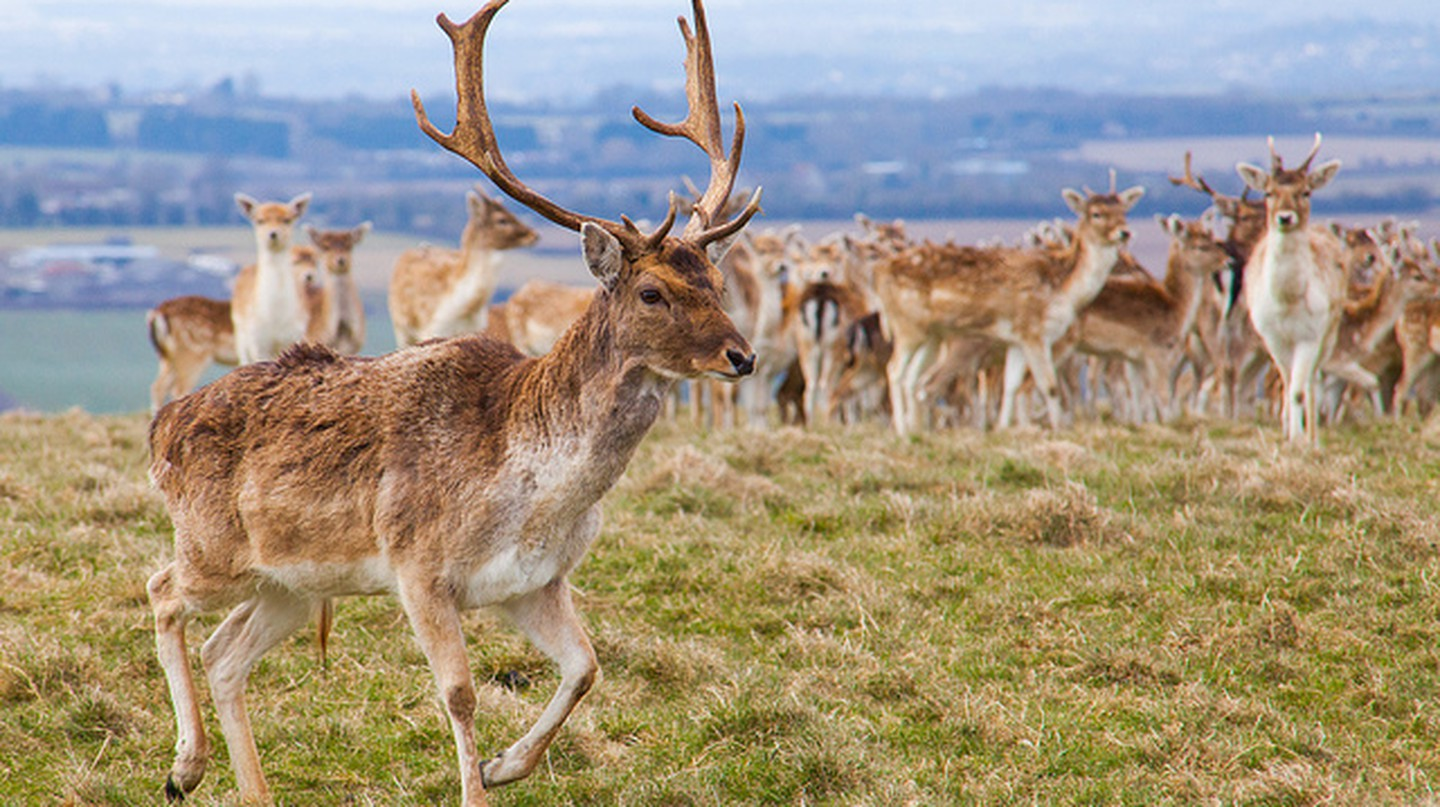 The Best Deer Spotting Parks In Britain