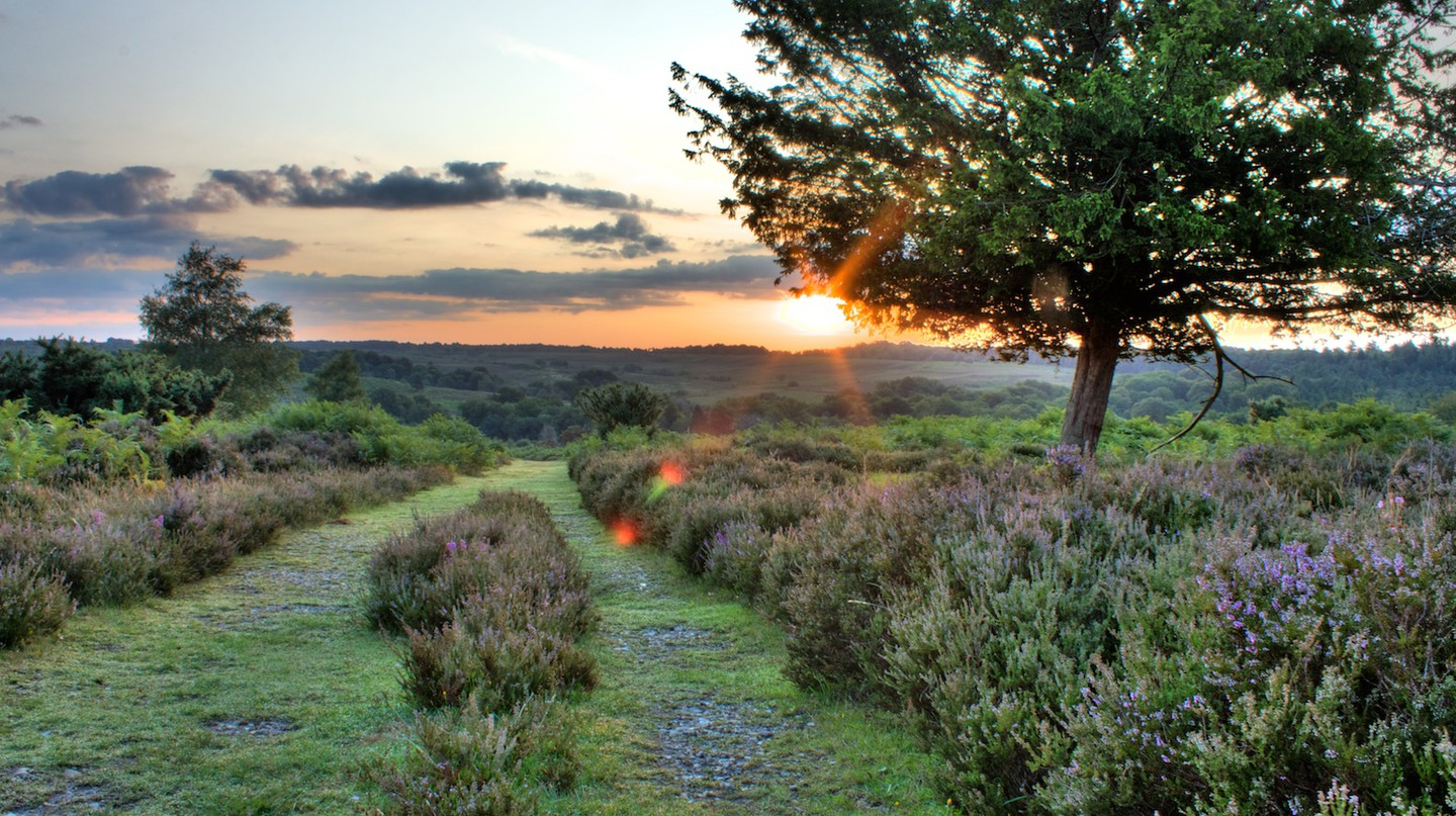 Sunrise in the New Forest | © davidgsteadman/Flickr