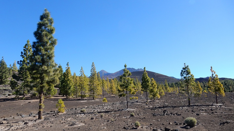 Surreal scenes in Teide National Park © Kirsten Henton