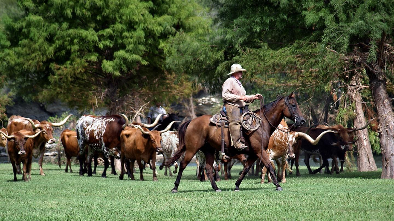 Chisholm Trail Cattle Drive | © Anne Worner/Flickr