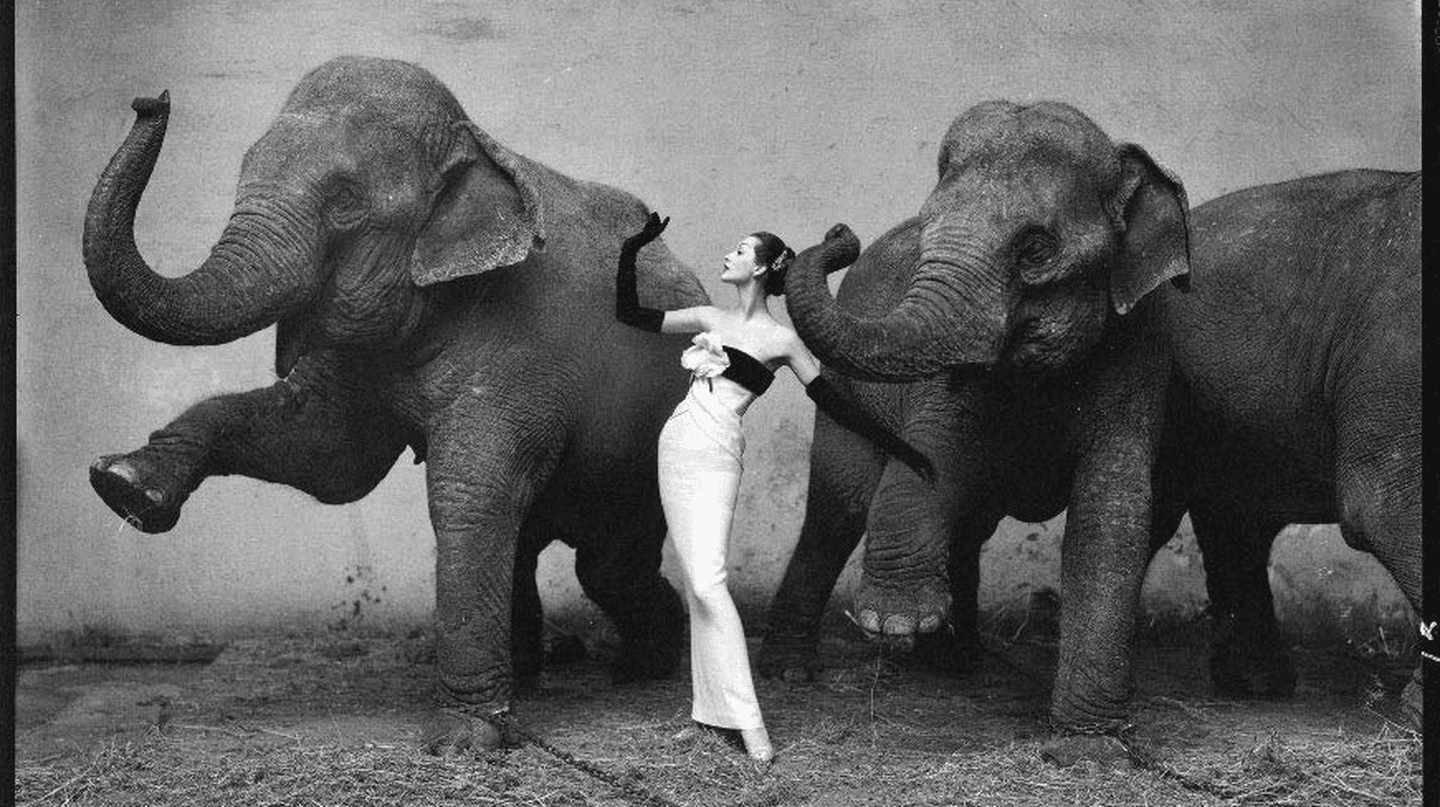 Dovima with elephants, evening dress by Dior, Cirque d'Hiver, August 1955 © Richard Avedon
