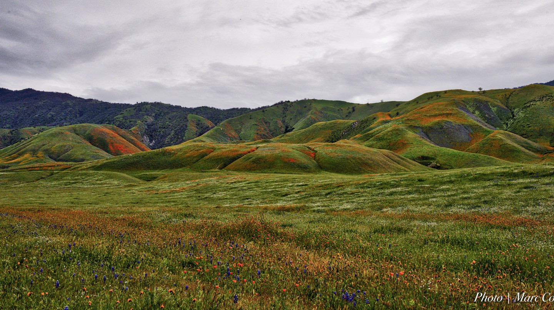 California Carpet | © Marc Cooper/Flickr