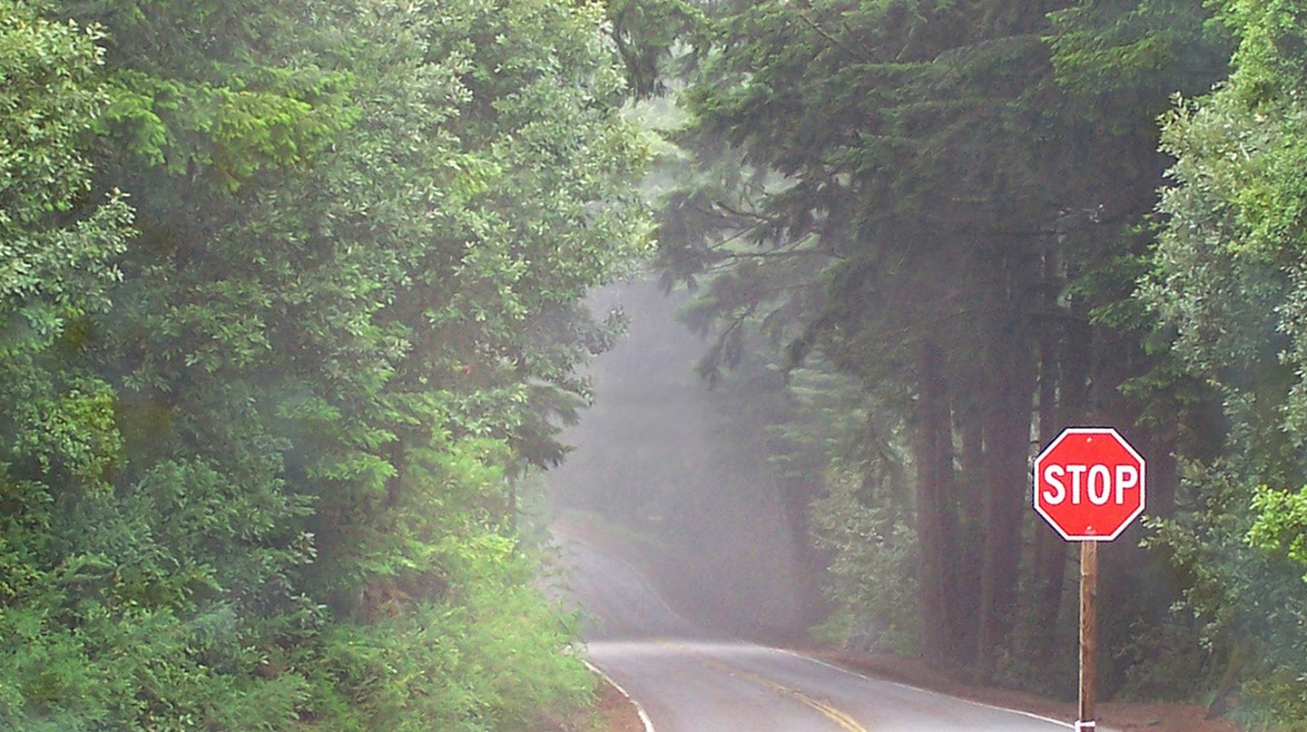 Foggy Road in Woodside California © Trace Nietert/Flickr