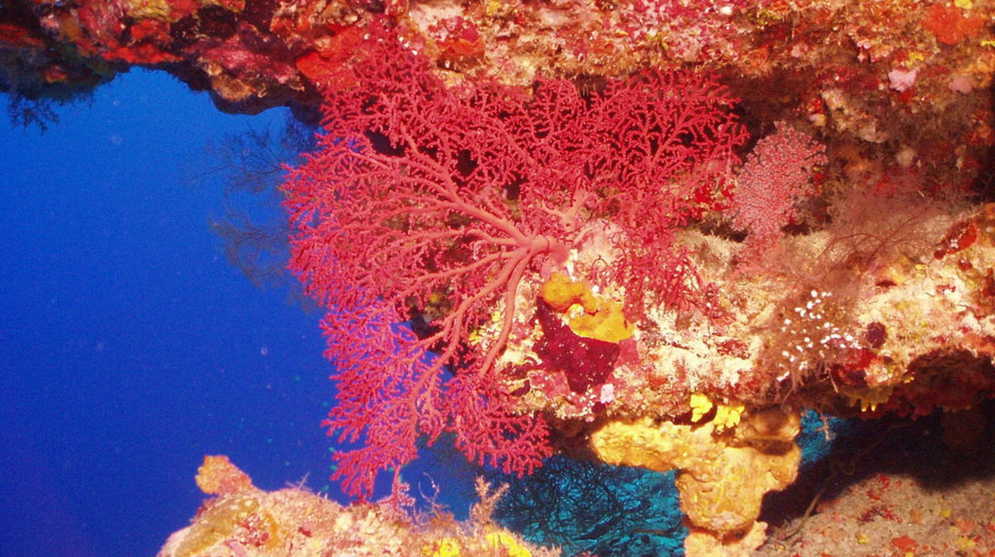 Coral in the Chagos Archipelago | © Charles and Anee Sheppard/WikiCommons