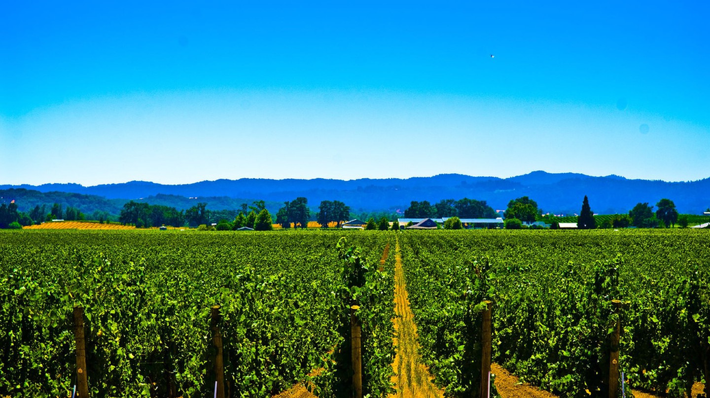 Vineyard, Sonoma | ©star5112/Flickr