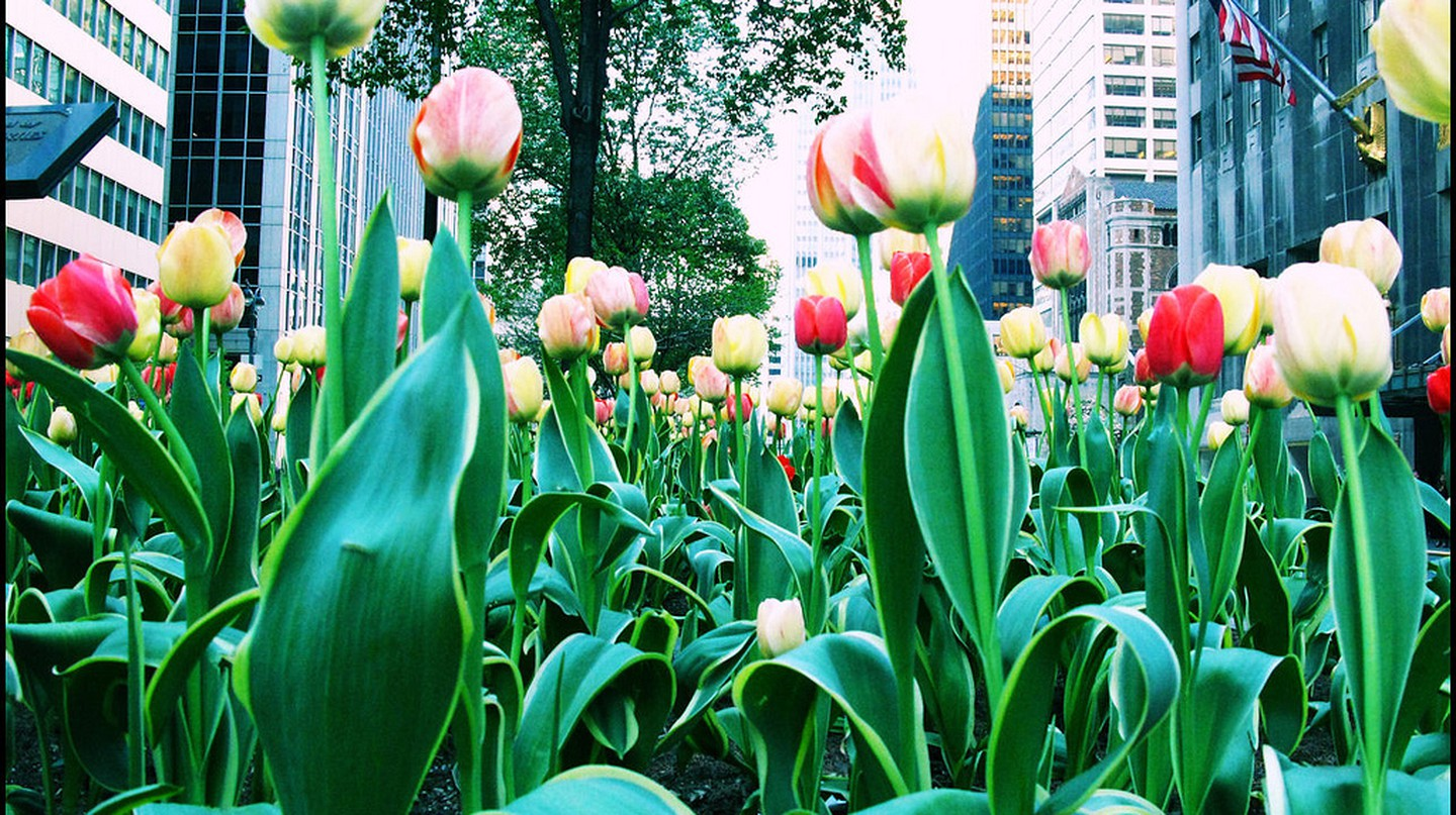 Spring on Park Ave. | © Taís Melillo/Flickr