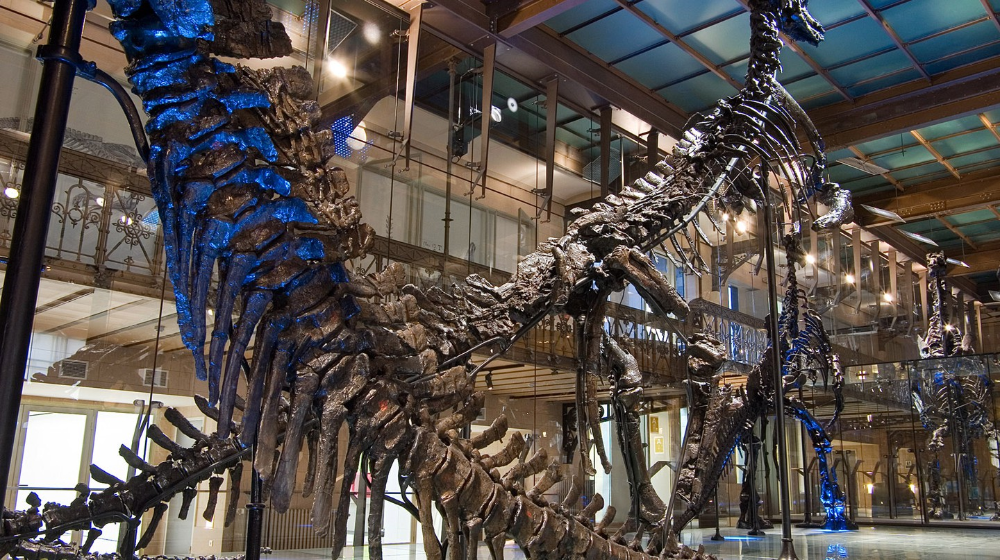 The Museum's famous Iguanodons| Courtesy of the Royal Belgian Institute of Natural Sciences
