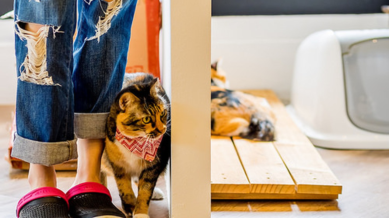 The Cat Cafe Bugis   © Kitty Mao/Flickr