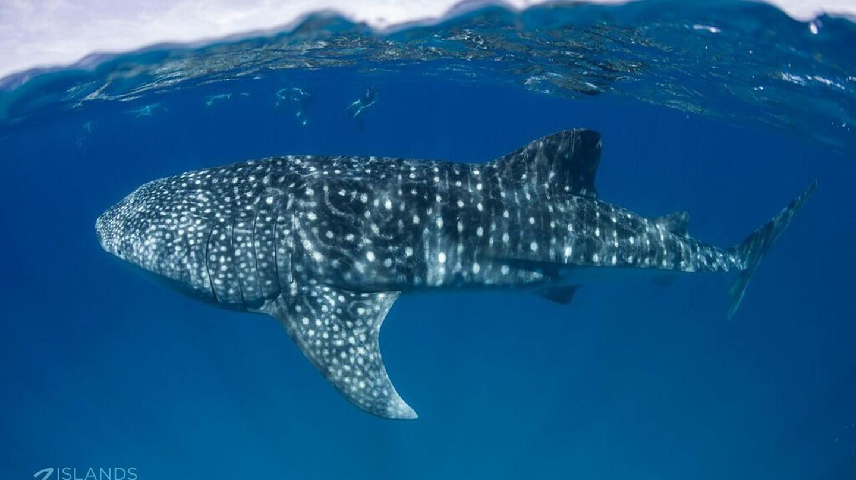 Australia's Best Underwater Encounters