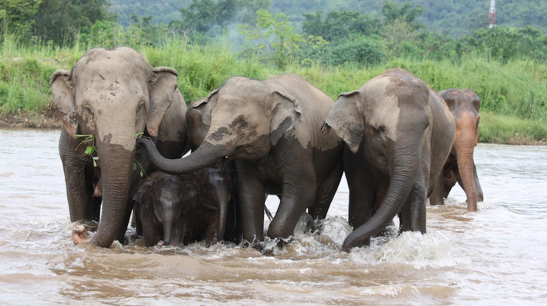 Watch elephants make a splash at Elephant Nature Park in Thailand | Courtesy of Rickshaw Travel