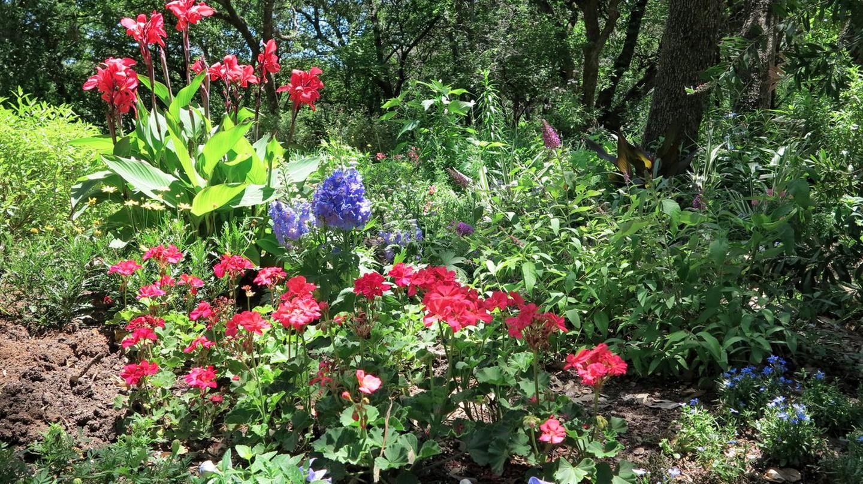 Austin has many beautiful, lush gardens