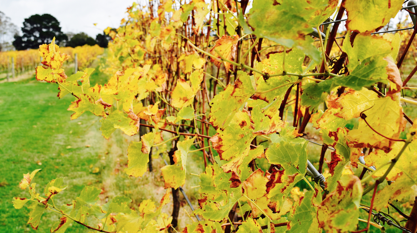 Up close with the vines during Autumn | © Jessica Poulter