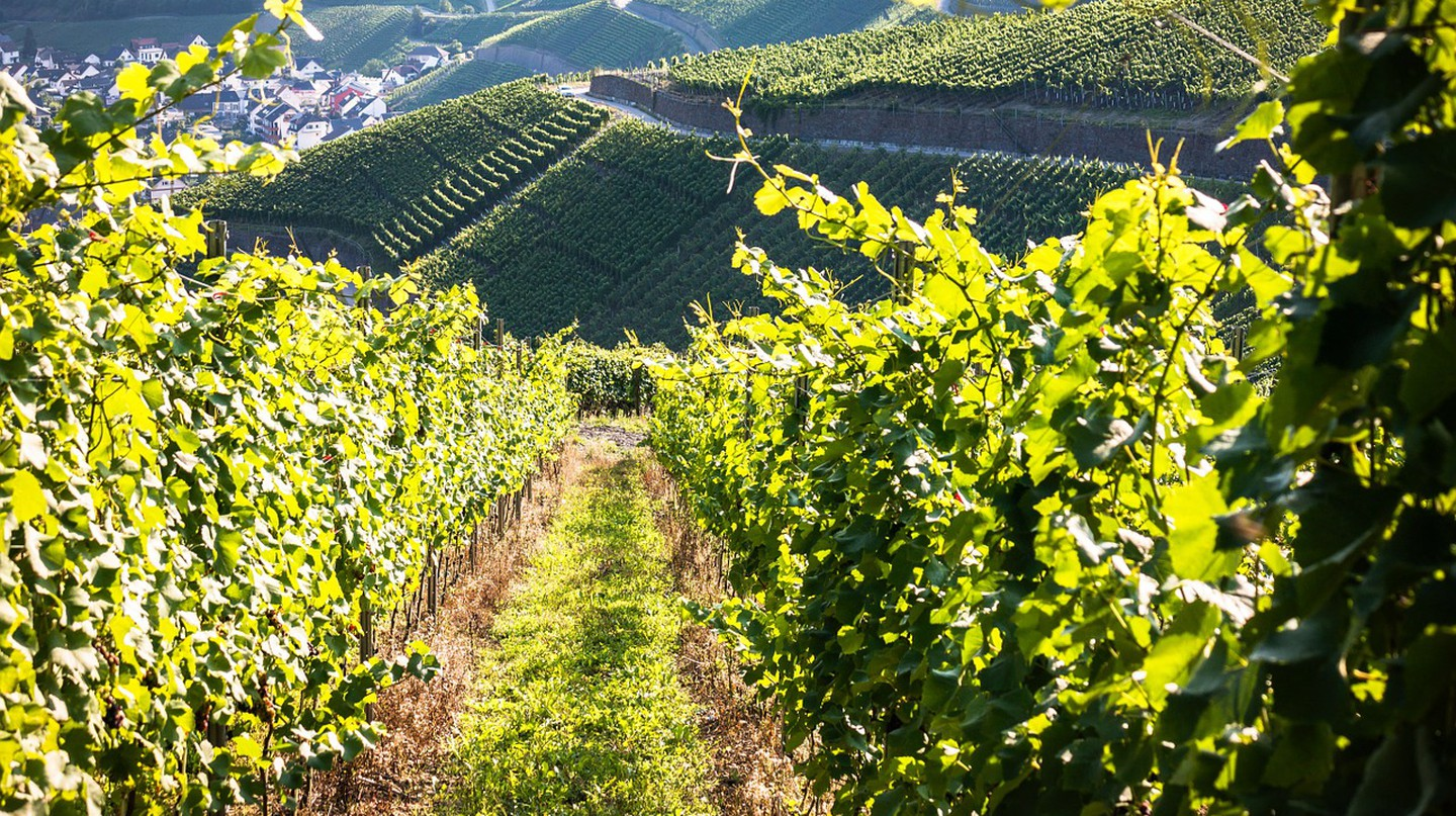 The Ultimate Guide To Cava, Spanish Sparkling Wine