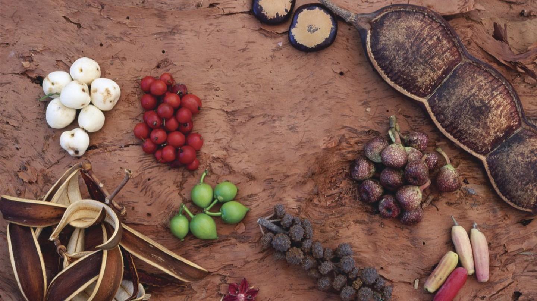 Bush Tucker - Tropical rainforest fruits on paper bark | Courtesy of Tourism Australia © Oliver Strewe