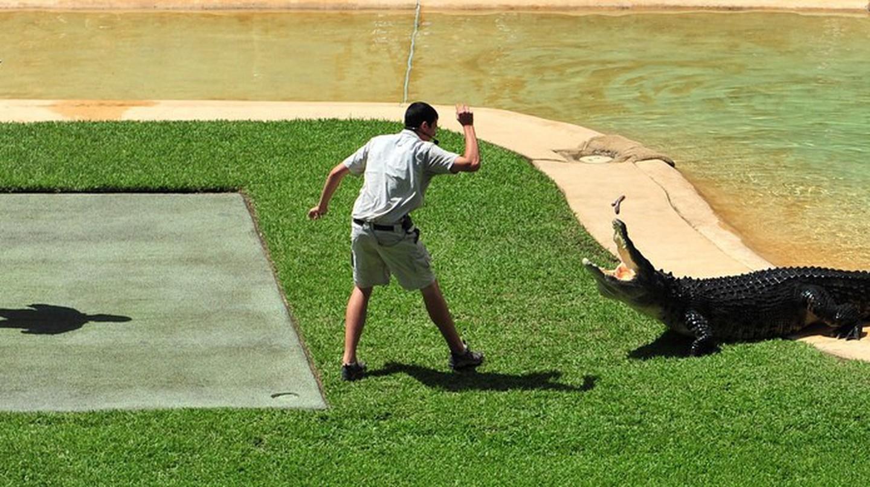 Crocoseum, Australia Zoo   © thinboyfatter / Flickr
