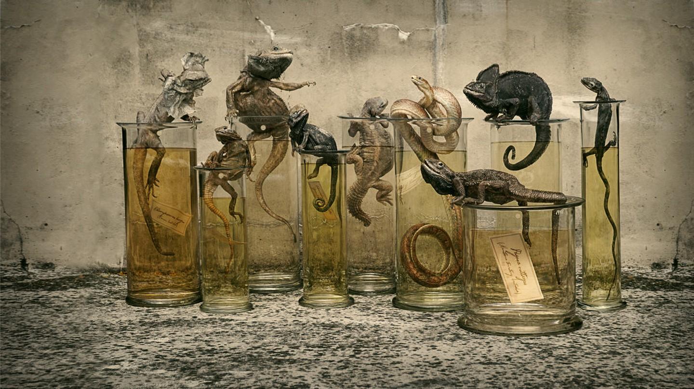 Darwin, Sinke & van Tongeren: Specimen | © Darwin, Sinke & van Tongeren
