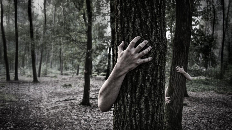A frightening forest | © Simon Wijers/Unsplash