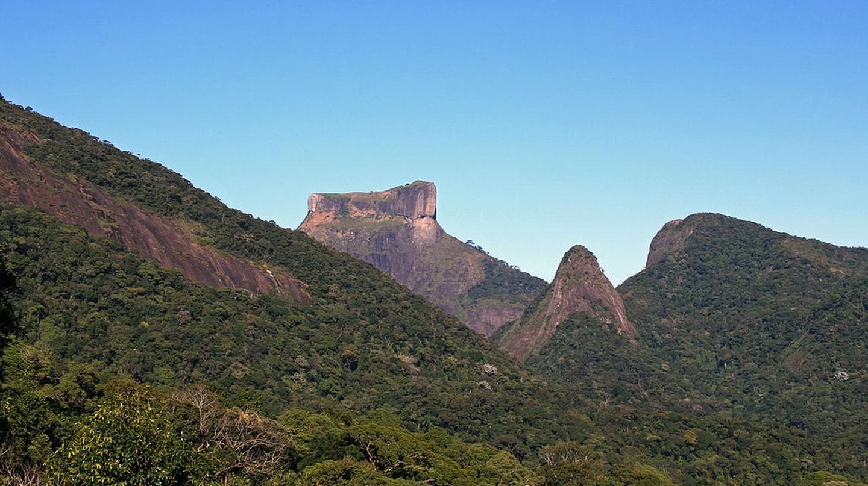 The Tijuca rainforest in Rio de Janerio  © Halley Pacheco de Oliveira/WikiCommons