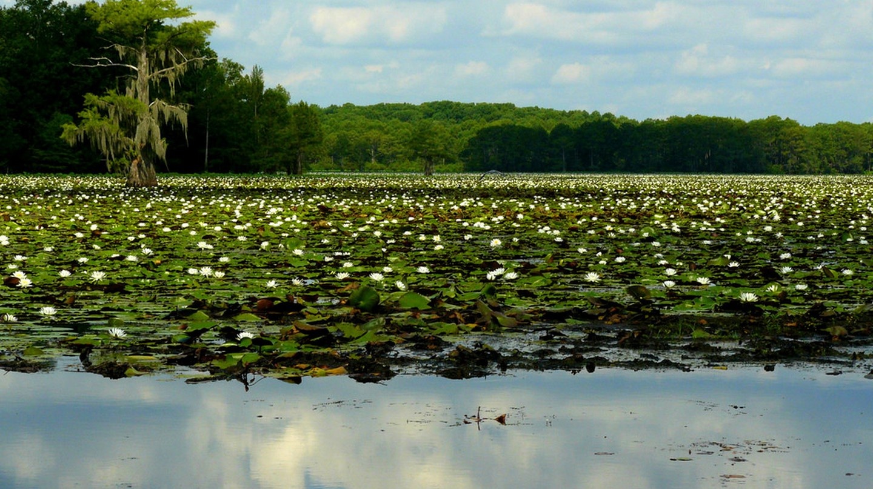 Caddo Lake   © Thomas & Dianne Jones/Flickr