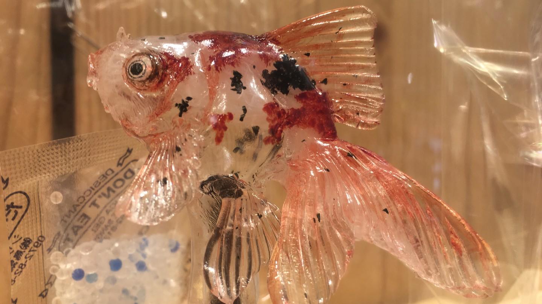 A mottled goldfish amezaiku sculpture from Ameshin | © Alicia Joy