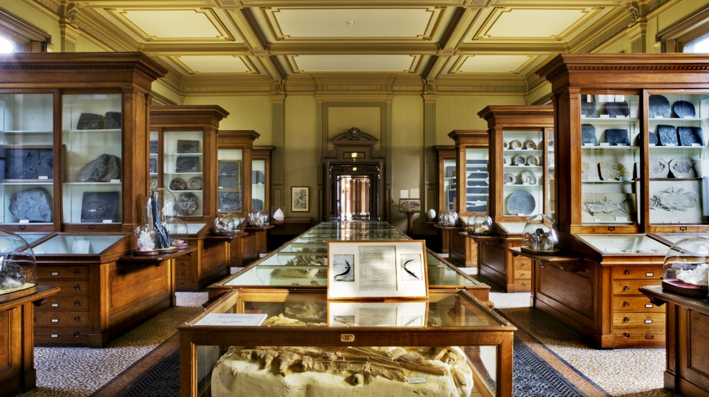 The Teylers Museums fossil collection | © The Teylers Museum. Haarlem / WikiCommons