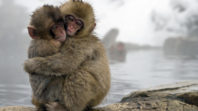 Snow monkeys | © SITS Girls/Flickr