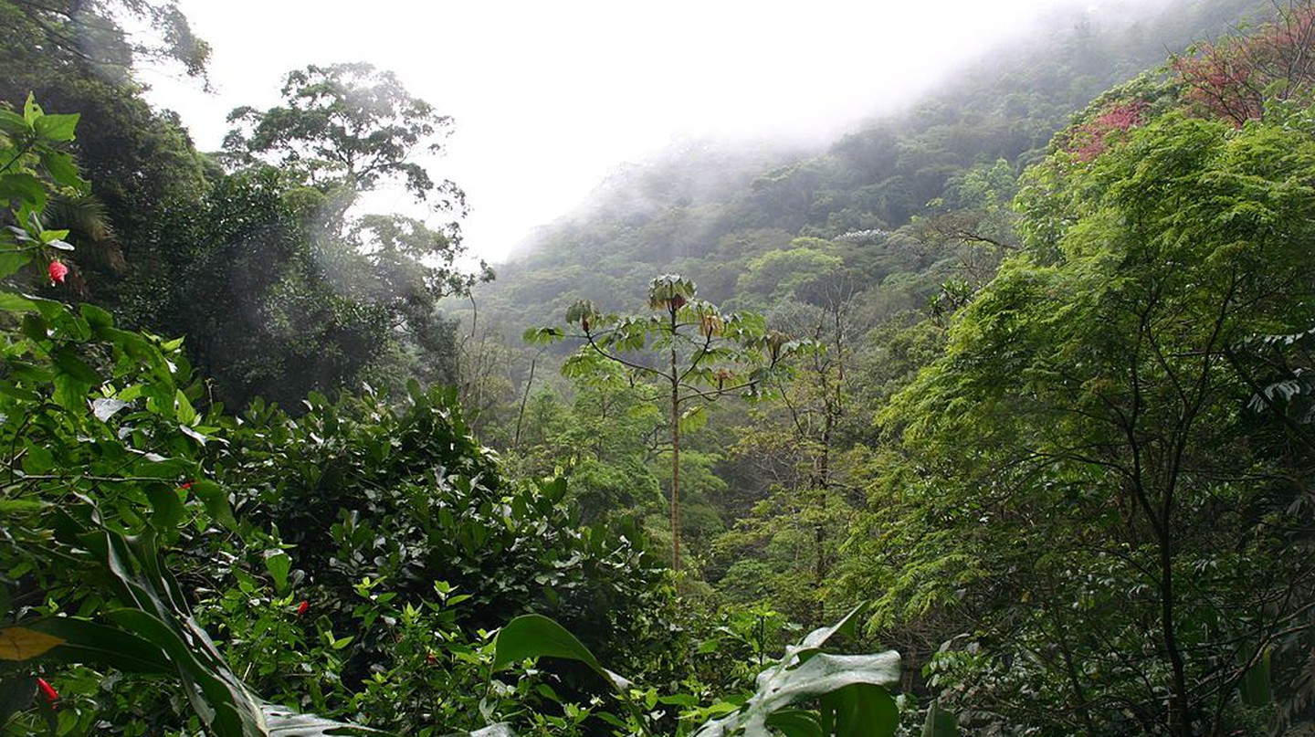 Tijuca forest |© Pierre André/WikiCommons