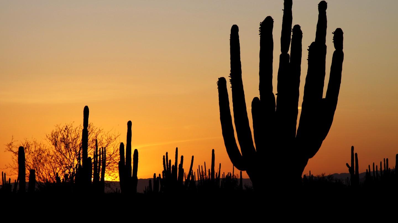 Sonora | © Tomas Castelazo/WikiCommons