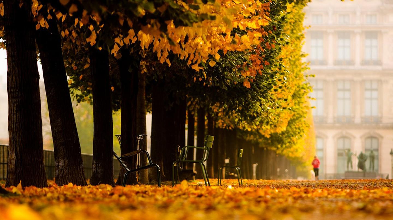 The Jardin des Tuileries in November │© Ryan Blyth