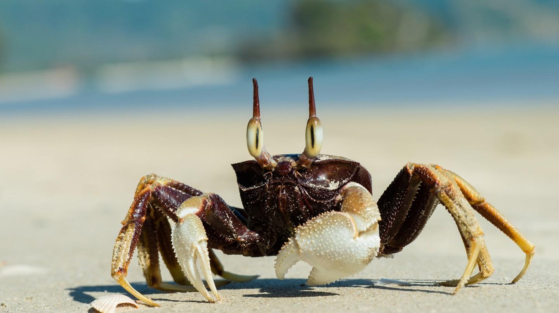 A crab | © Rushen/Flickr