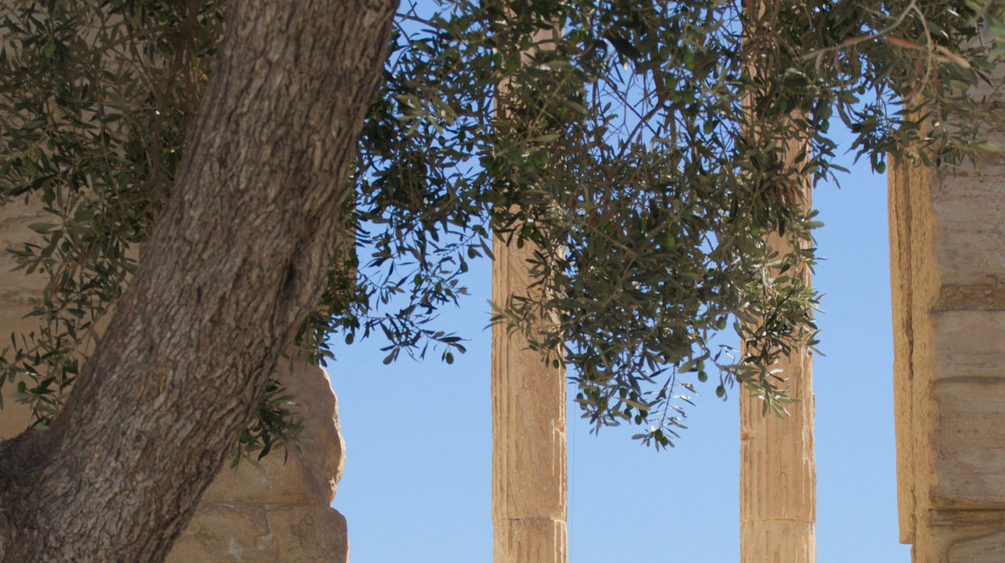 View of the olive tree |© Thibaut Démare/Flickr