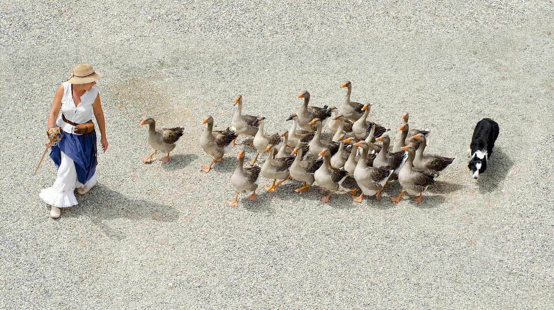 French goose herding │© Skitterphoto