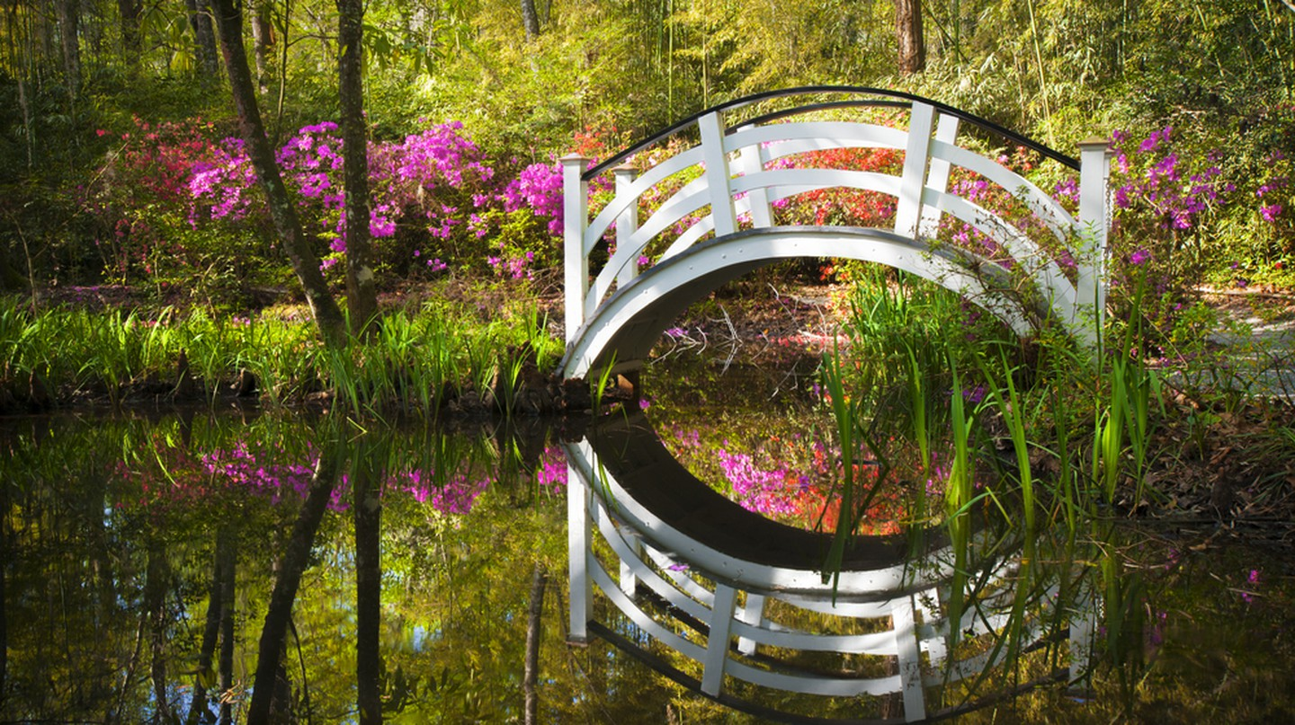 Pond in south Charleston | © Dave Allen Photography/Shutterstock