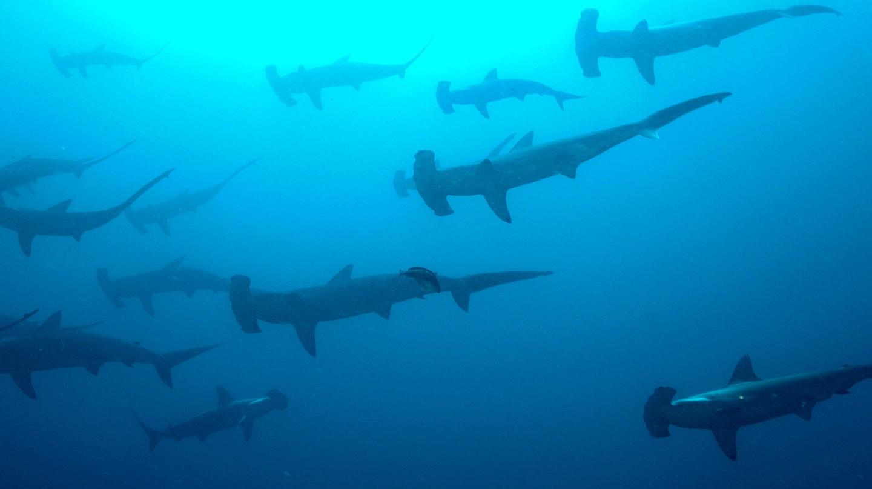 Sharks!| © Ryan Espanto/Flickr