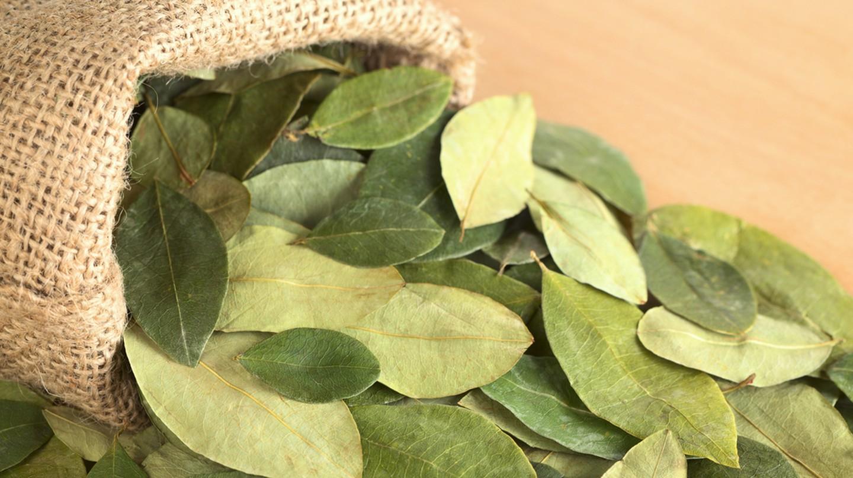 Dried coca leaves © Ildi Papp/Shutterstock