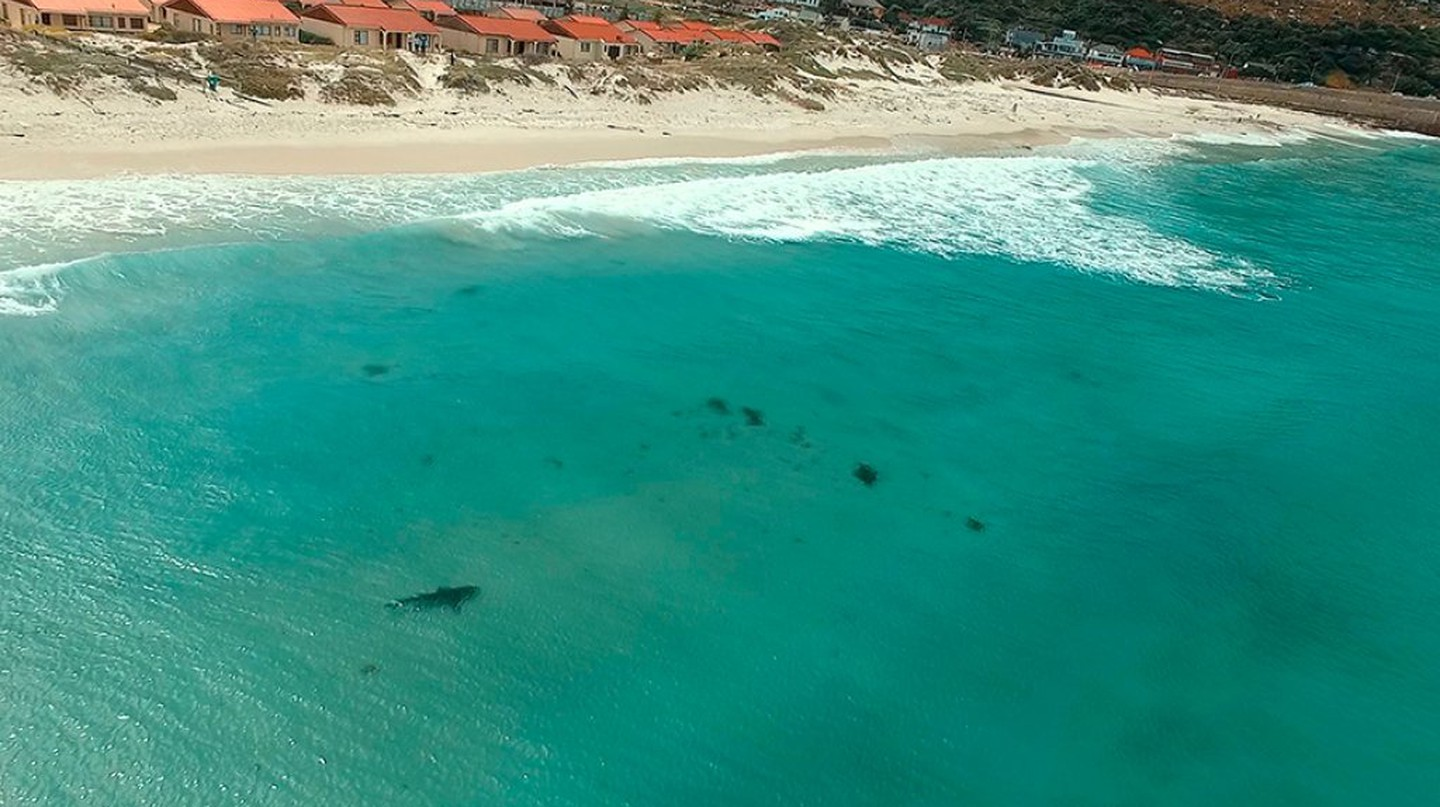 A copper shark is spotted by a drone in False Bay, Cape Town © weFix